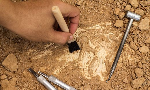 Ausgrabungen - Sujet Fotolia