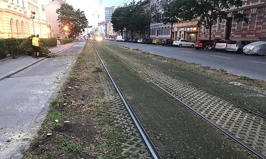 Conrad-von-Hötzendorf-Straße Rasengleise
