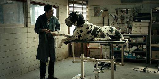 Film/ Dogman