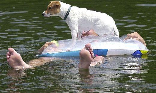 Hund beim Wasserausflug