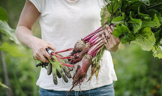 Bitte bunt: Frisches Obst und Gemüse sind ideal für das Mikrobiom.