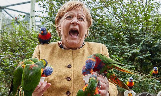 Als das Futternäpfchen leer war, biss der Lori zu - und Bundeskanzlerin Angela Merkel schrie kurz auf