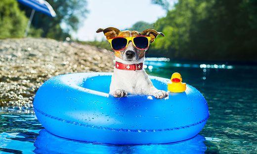 Mensch und Tier suchten im heurigen Sommer ständig Abkühlung