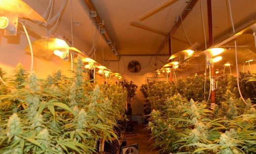 klagenfurt 20 kilo cannabis angebaut drei jahre haft. Black Bedroom Furniture Sets. Home Design Ideas