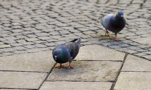 Das Taubenfüttern ist verboten