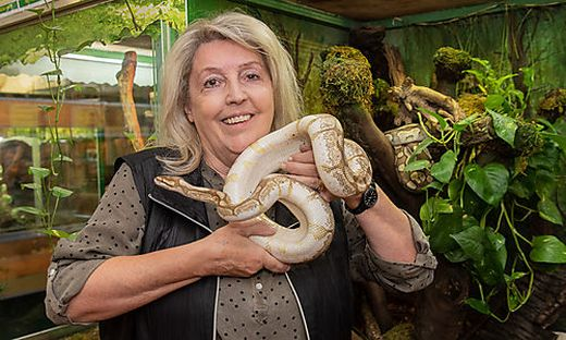 Helga Happ hat drei ausgesetzte Königspythons in ihrem Reptilienzoo aufgenommen