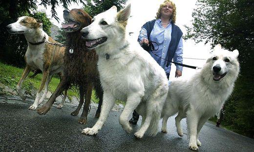 Gruppenreise aus dem Tierheim geplant