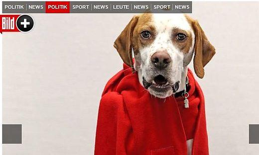 Irrer Streit um GroKo-Mitgliederentscheid So kam die SPD auf den Hund