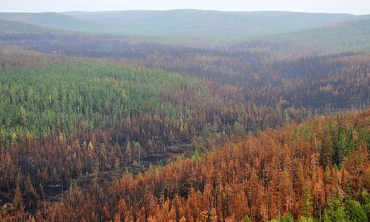 RUSSIA-FIRE-FORESTS