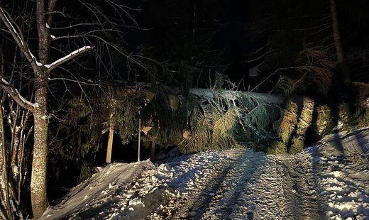 In Bad Kleinkirchheim stürzten mehrere Bäume auf den Mallnockweg
