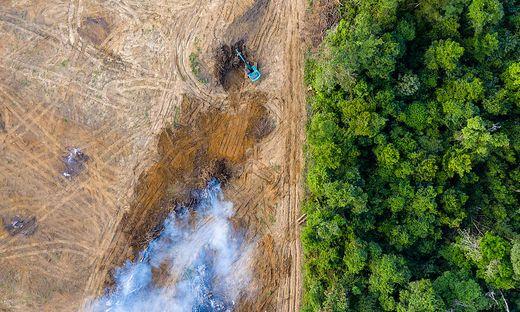 Der Amazonas-Regenwald ist von Abholzung bedroht