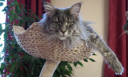 29.000 Katzen leben in steirischen Haushalten