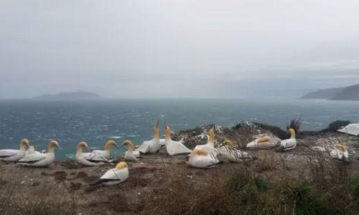 Neuseeland: Der