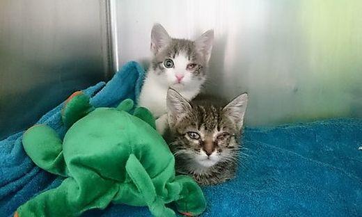 23 schwer kranke Katzen wurden Mitte Juli anonym beim Tierschutzkompetenzzentrum Klagenfurt abgegeben
