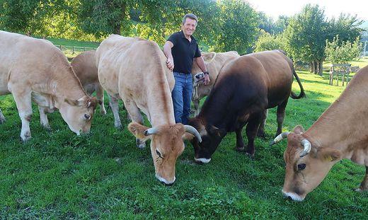 Klaus Schmidhofer inmitten seiner Murbodner Rinder