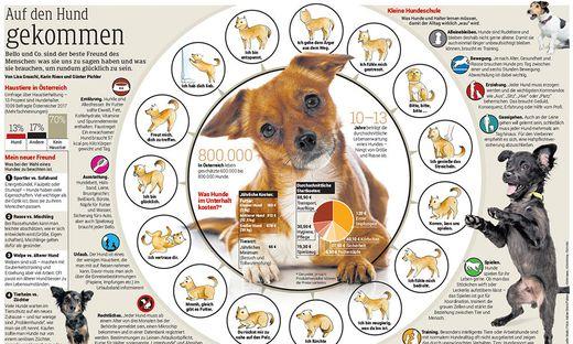 Hundesprache Und Ihre Erklärung