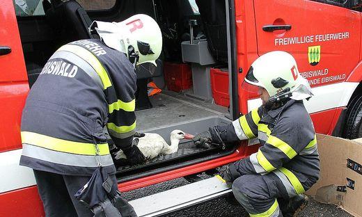 Leider verstarb der von der Feuerwehr gerettete Altstorch in Wien