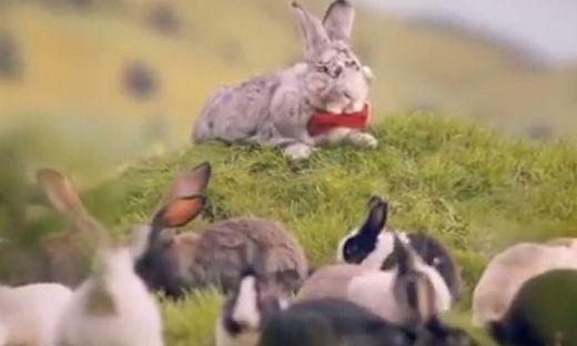 Polnische Regierung Kaninchen-Video soll zum Kinderkriegen animieren