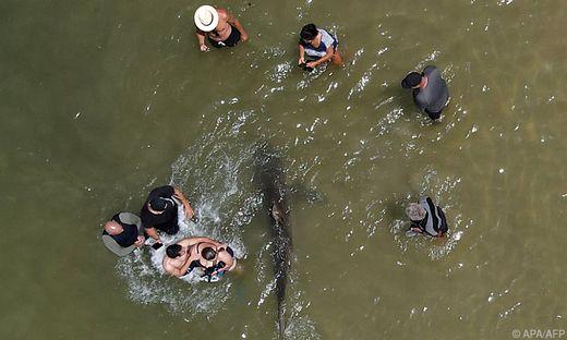 Mutige Strandbesucher wagten sich am Dienstag ganz nah an die Raubfische heran, um die aus dem flachen Wasser ragenden Flossenspitzen zu fotografieren und Selfies zu machen