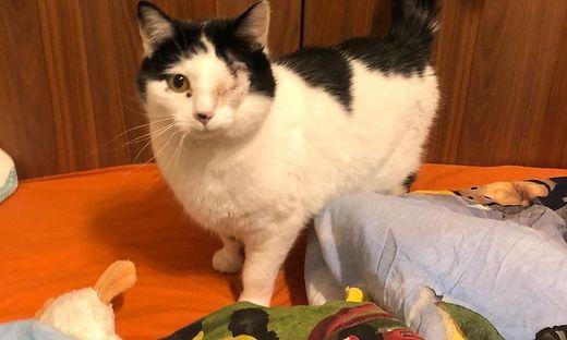 Katze Miri wurde mit aufgeschnittenem Bauch gefunden