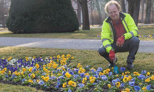 Gärtnermeister Johann Lickl von der Holding Graz ist derzeit gefragt