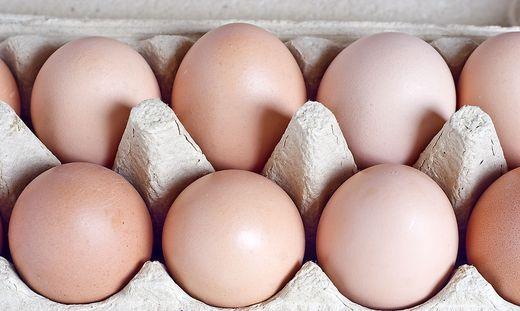 Fipronil Eier Erkennen