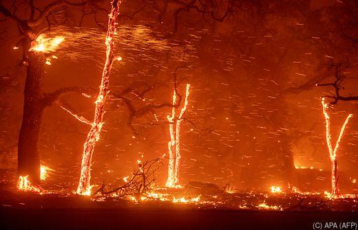Waldbrände in Kalifornien - Trump macht Behörden verantwortlich