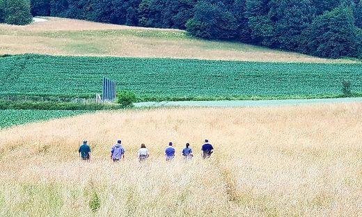 Die Helfer gehen in einer Reihe durch die Wiesen und Felder, um möglichst viele Tiere aufzuspüren, wie vor Kurzem in St. Georgen am Sandhof bei Klagenfurt