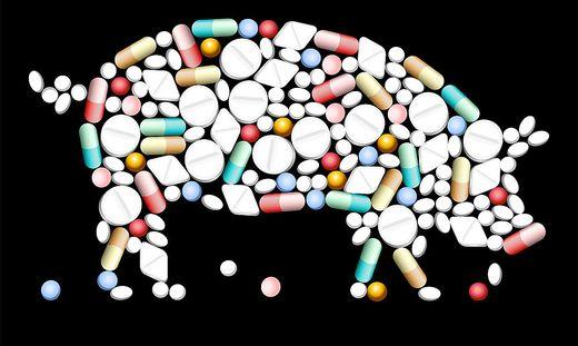 Um die wachsende Nachfrage zu decken, wurde die Tierzucht intensiviert, unter anderem mit einem höheren Einsatz von Antibiotika
