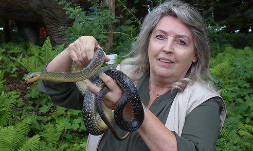 """""""Wenn Schlangen beißen, dann um sich zu verteidigen"""", sagt Expertin Helga Happ"""
