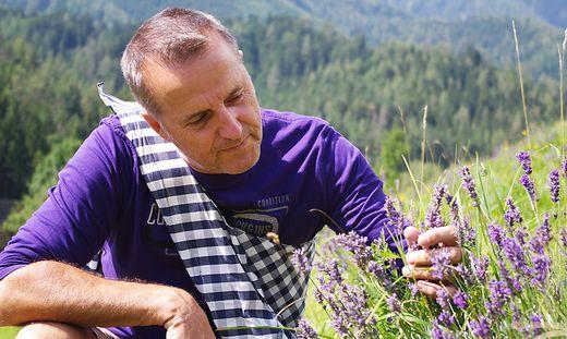 Erwin Krall betrachtet die Pflanzen, vor wenigen Tagen hat die Ernte begonnen. Krall will sich in seiner Pension intensiv damit beschäftigen