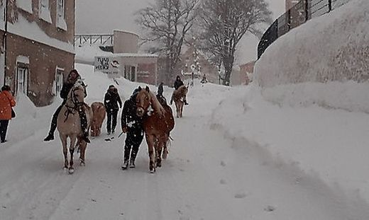 14 Pferde mussten am Donnerstag in Sicherheit gebracht werden