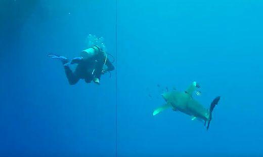 Kränkl wurde von dem Hai attackiert