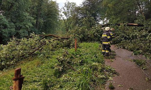 Umgestürzte Bäume hielten die Freiwillige Feuerwehr in Maria Saal auf Trab.