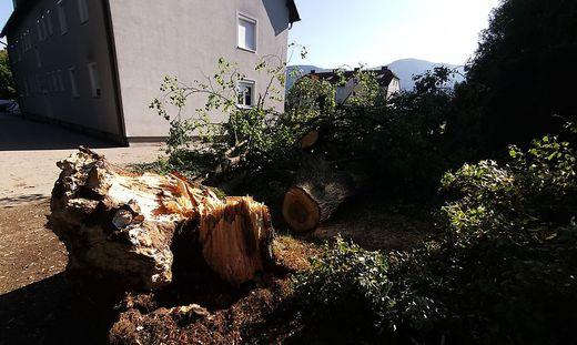 In St. Stefan, Stadtgemeinde Wolfsberg, beschädigte ein umgestürzter Baum drei Pkw