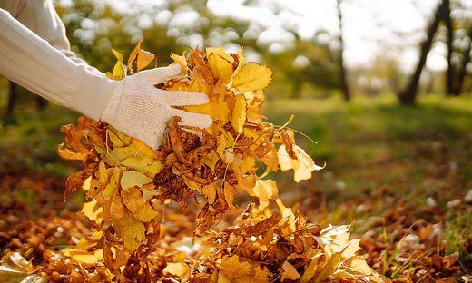 Goldwert: Laub sollte man nicht aus dem Garten entfernen, sondern nutzen.