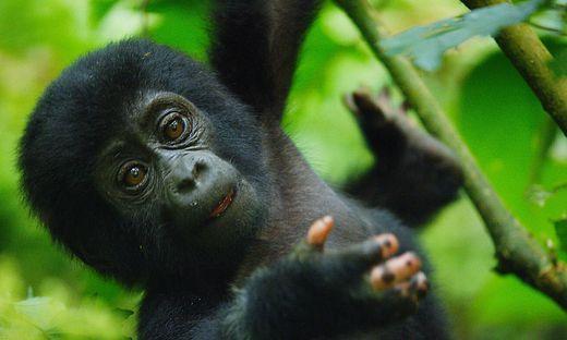 Fabelhafte Tierbabys: Beinahe selbstst�ndig (3)