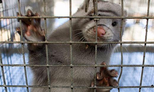 Bis 2025: Norwegen schließt alle Pelzfarmen