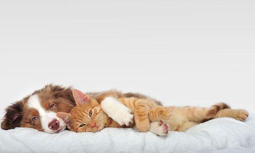 Hund; Katze; Corona