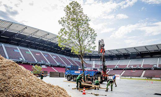 Der erste Baum wurde eingepflanzt