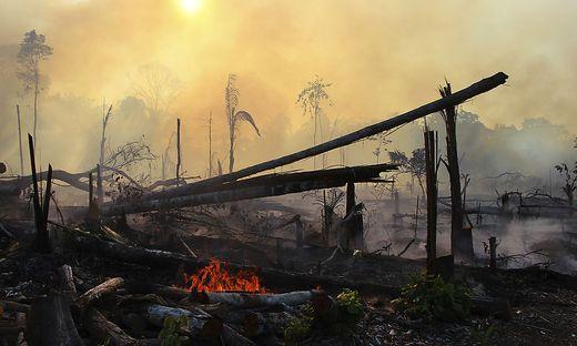 Tag des Amazonas: Die Wälder brennen weiter