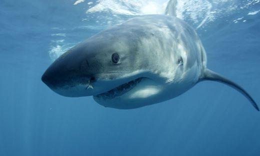 Jahre alter Surfer stirbt bei Hai-Angriff in Australien