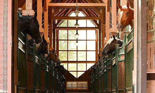 Stall der Pferdeklappe des österreichischen Tierschutzvereins