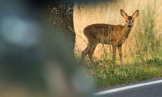 Musterprozesse: Die Jäger wollen eine Mitschuld oder Schuld der Autofahrer juristisch erreichen
