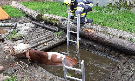 Die Kuh wurde mittels Gurten vom Traktor und der Feuerwehr vorsichtig herausgezogen