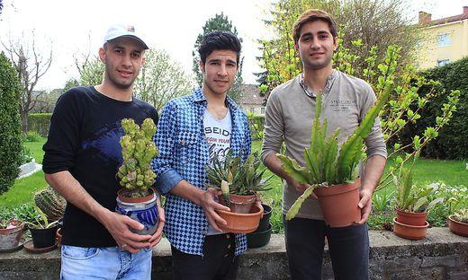 Fahad Al Farha, Hajikhalaf Hassan und Qusai Albajati (von links) mit den Kakteen, die der Dieb stehlen wollte
