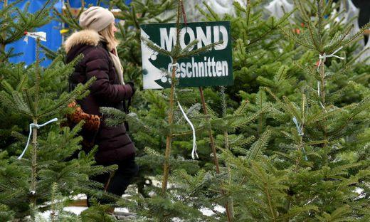 Weihnachtsbaum Brauchtum.Wien 700 Tonnen Christbäume Warten Auf Ihre Entsorgung