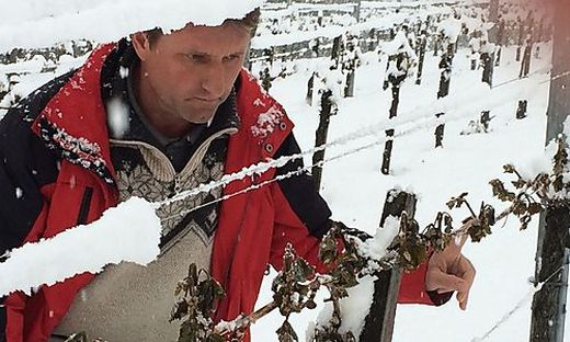 """In Heimschuh wurde Winzer Herbert Kratzer vom Schnee überrascht. Jetzt hofft man auf den Austrieb der """"Beiaugen"""""""