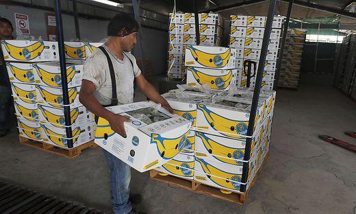 Der Handel mit Obst zwischen den USA und Mexiko wäre von den Strafzöllen stark betroffen