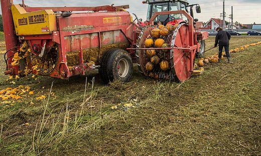 Symbolbild: Traktor bei der Ernte von Ölkürbissen